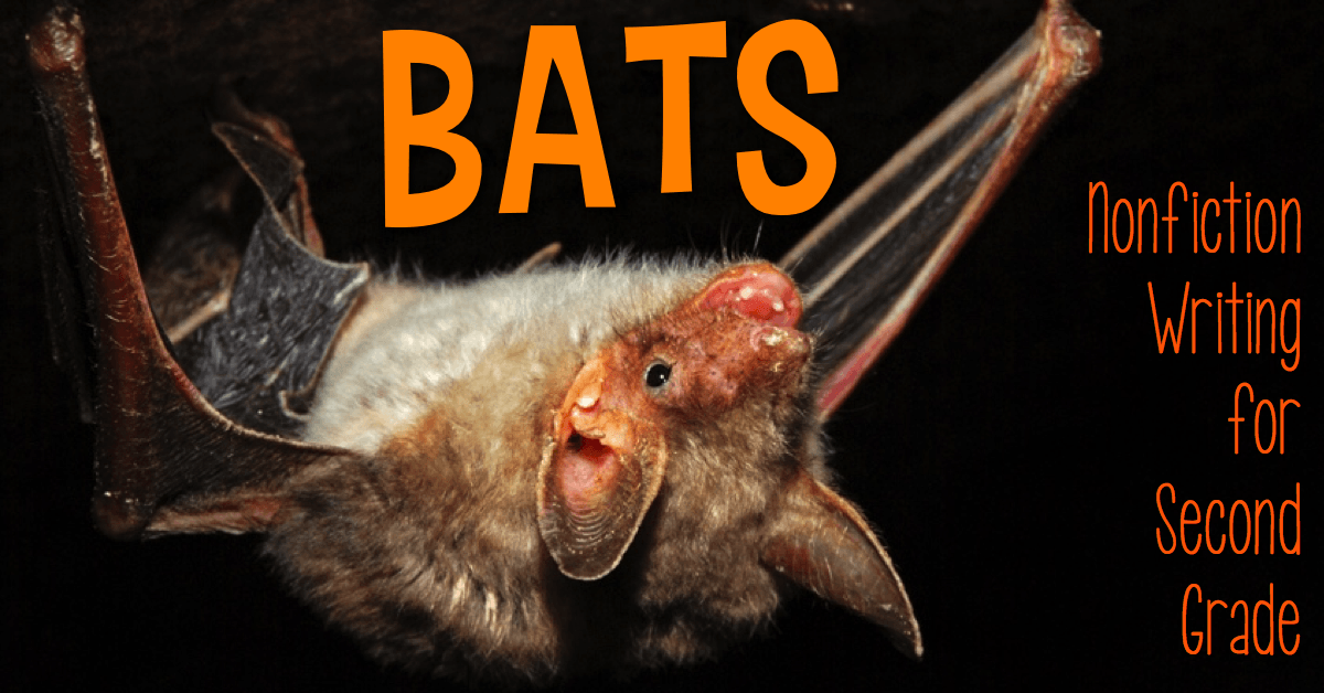 bats essay What do they look like little brown bats are appropriately named their fur is glossy, and can be dark-brown, golden-brown, reddish, or olive-brown.
