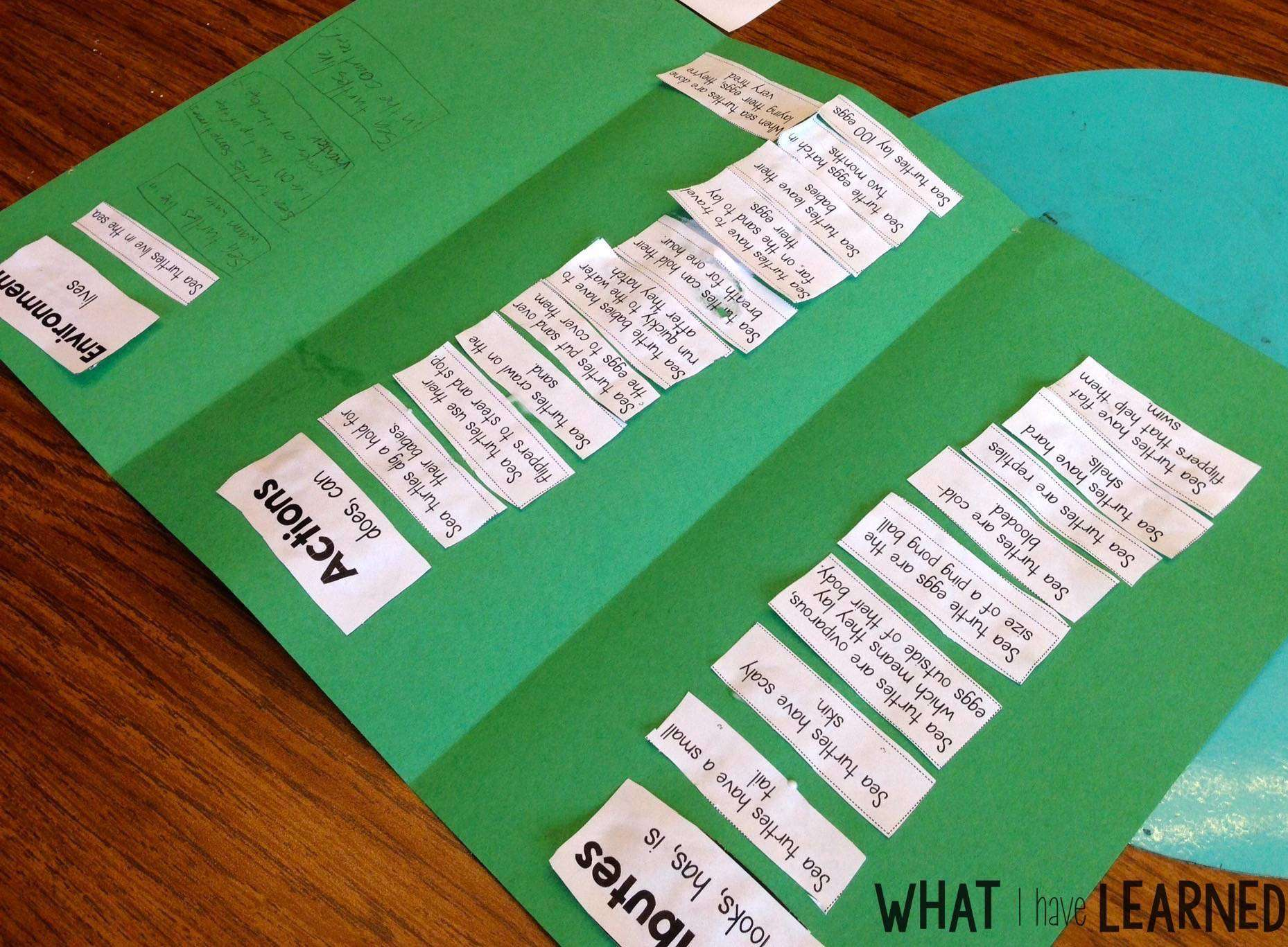 set the routine informational writing week sea turtles sorting facts helps students organize their facts and thinking before writing their informational text this