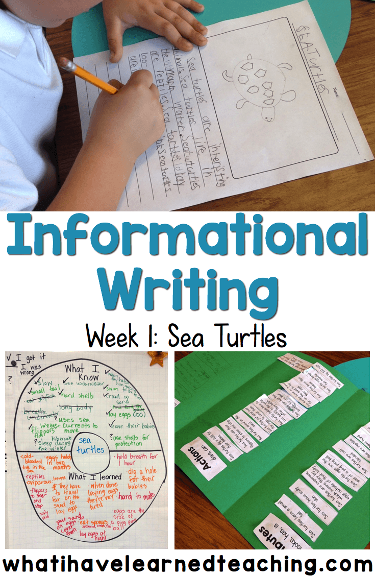 Writing an informational essay 5th grade