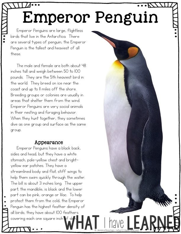 articles about penguins