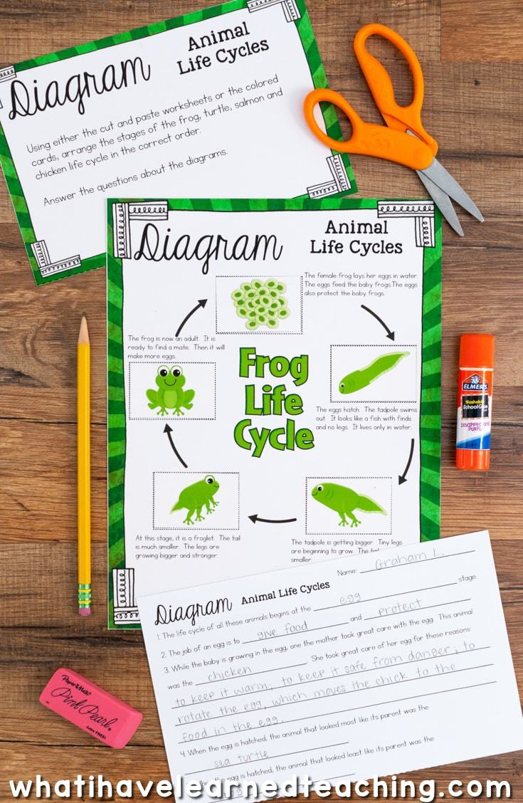 worksheet Life Cycle Of Plants And Animals Worksheets life cycles of plants and animals science stations for third grade cycle include insect comparison stages animal cycles