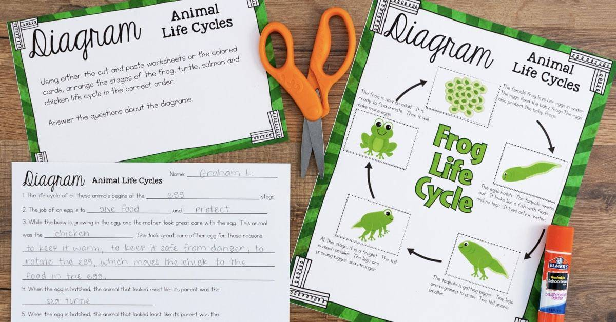 Life Cycles Of Plants And Animals Science Stations For Third Grade