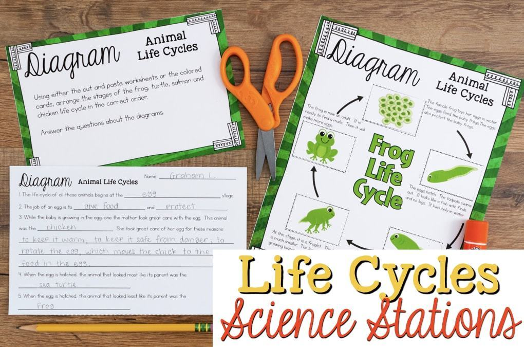 Life Cycles of Plants and Animals - Science Stations for Third Grade