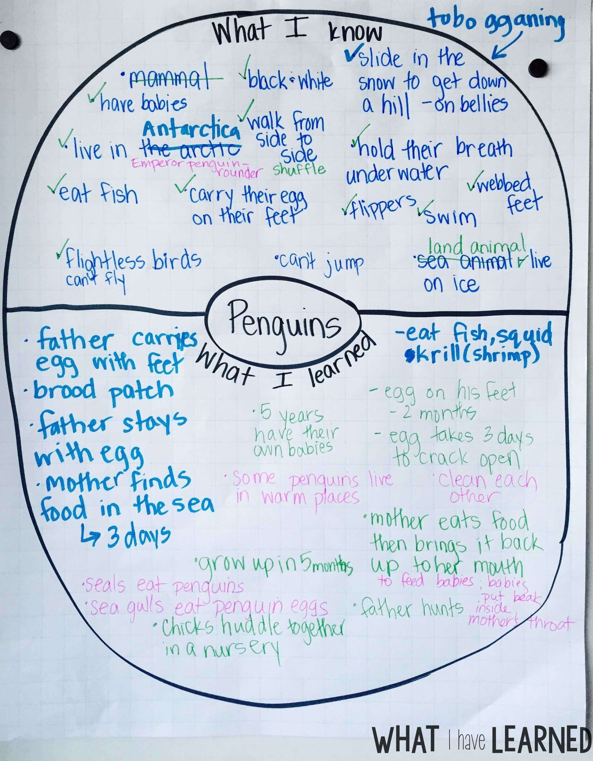 All About Penguins - Informational Reading and Writing for the First ...