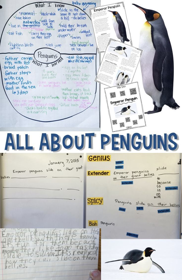 All About Penguins Informational Reading And Writing For