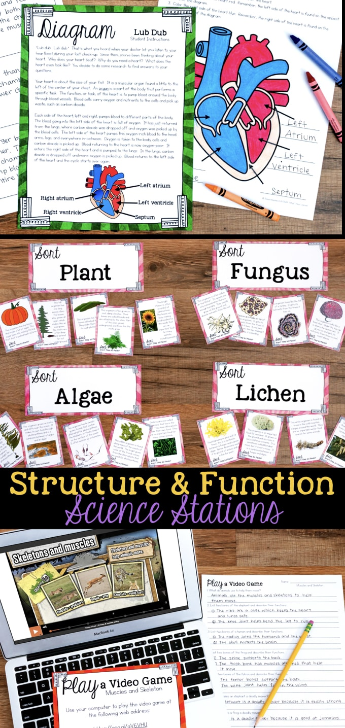structure and function how organisms live behave